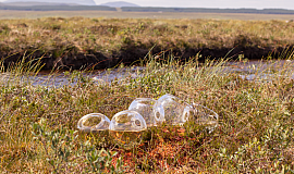 Case Study: Exploring Scotland's Blanket Bog with Cryptic
