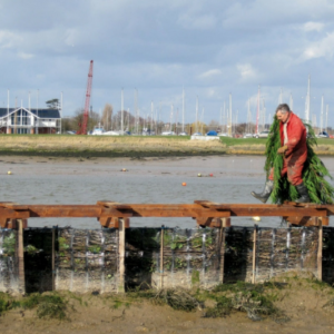 Sutton Tidal Attenuation Barrier and Falkenham Saltmarsh Tidal Management Scheme 6