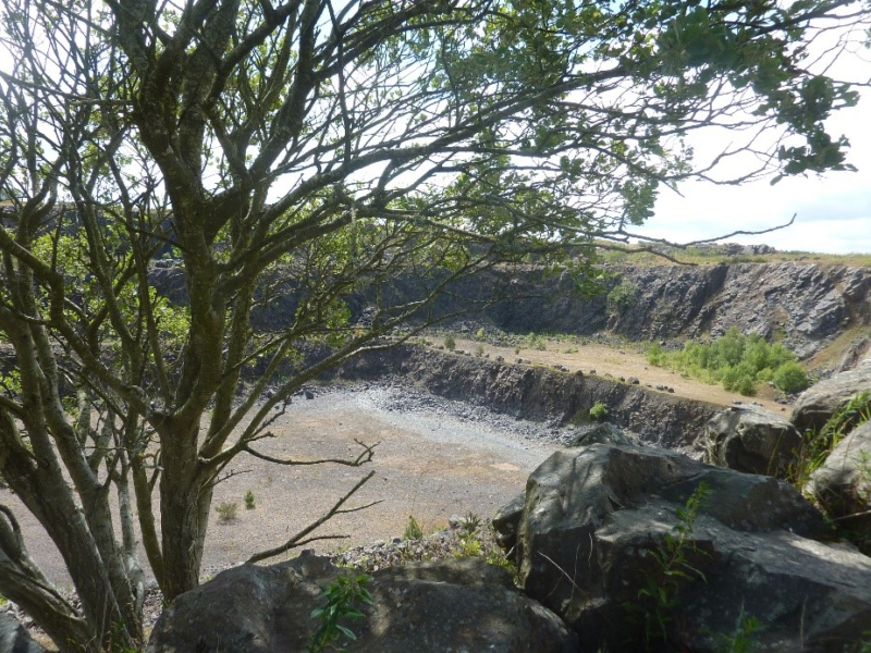 Dunion Quarry, empty but starting to regrow behind a tree