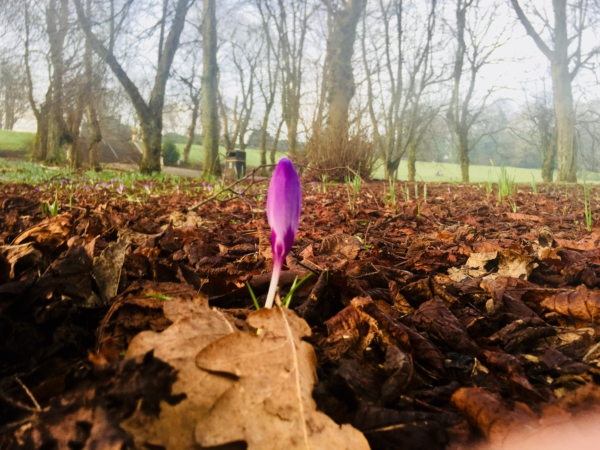 Guest Blog: Crises. Crocuses. Creativity.
