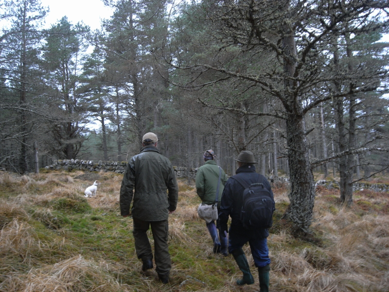 The Black Wood of Rannoch: Future Forest 3