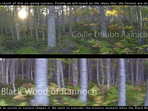 The Black Wood of Rannoch: Future Forest 4